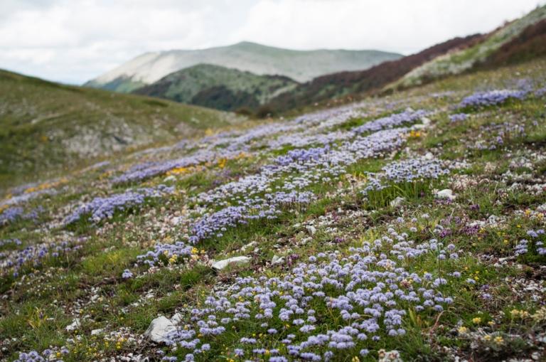 Monte Puzzillo fiori