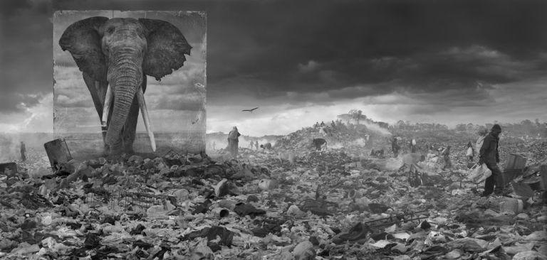 Wasteland with elephant, INHERIT THE DUST
