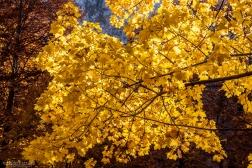 fotografare-autunno